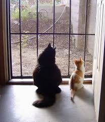 cats looking outside