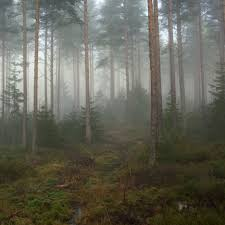 dawn in forest