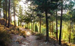 pw-jerusalem_forest
