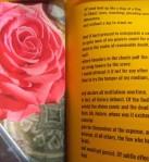 ez rose glimpse 2 - Edited